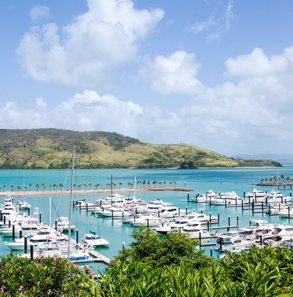 Hamilton Island marina with boats lined up viewed through bushes, with Whitsundays in background
