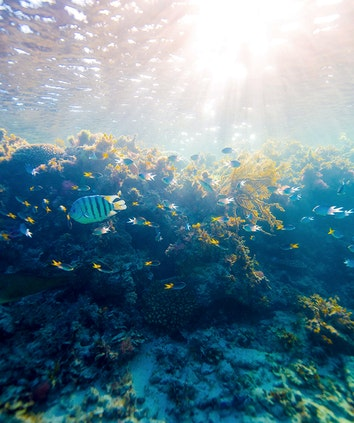 qualia underwater image of sunlight cascading upon coral and fish in Great Barrier Reef